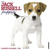Just Jack Russell Puppies 2018 Wall Calendar (Dog Breed Cale