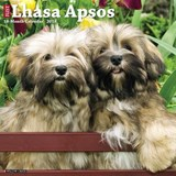 Just Lhasa Apsos 2018 Calendar | Willow Creek Press |
