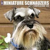 Just Minature Schnauzers 2018 Calendar