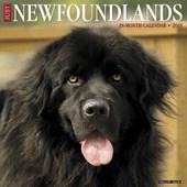 Just Newfoundlands 2018 Wall Calendar (Dog Breed Calendar)