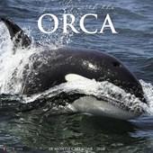 Orcas 2018 Calendar