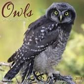 Owls 2018 Wall Calendar