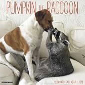 Pumpkin the Raccoon 2018 Calendar
