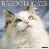Ragdoll Cats 2018 Wall Calendar
