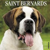 Just Saint Bernards 2018 Calendar