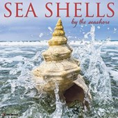 Sea Shells 2018 Wall Calendar