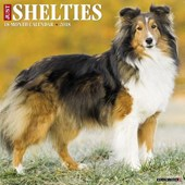 Just Shelties 2018 Calendar