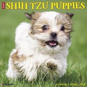 Just Shih Tzu Puppies 2018 Calendar