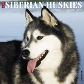 Just Siberian Huskies 2018 Calendar