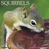 Squirrels 2018 Wall Calendar | Willow Creek Press |
