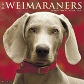 Just Weimaraners 2018 Wall Calendar (Dog Breed Calendar)