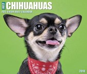 Just Chihuahuas 2018 Box Calendar (Dog Breed Calendar)