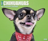 Just Chihuahuas 2018 Calendar | Not Available |