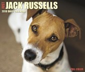 Just Jack Russells 2018 Box Calendar (Dog Breed Calendar) |  |