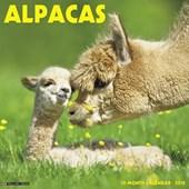 Alpacas 2018 Wall Calendar