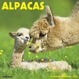 Alpacas 2018 Calendar | Willow Creek Press |