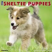 Sheltie Puppies 2018 Calendar