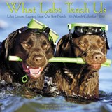 What Labs Teach Us 2018 Calendar | Willow Creek Press |
