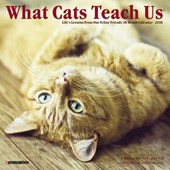 What Cats Teach Us 2018 Mini Wall Calendar