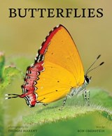 Butterflies | Ron Orenstein |
