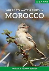 Where to Watch Birds in Morocco | Patrick Bergier |