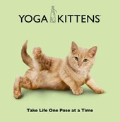 Yoga Kittens | Dan Borris |