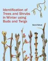 Identification of Trees and Shrubs in Winter Using Buds and