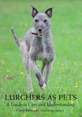 Lurchers as Pets | Carol Baby |