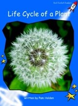 Life Cycle of a Plant | Pam Holden |
