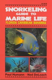 Snorkeling Guide to Marine Life