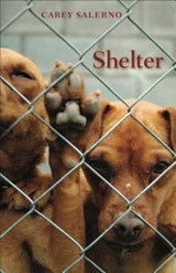 Shelter | Carey Salerno |