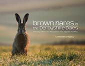 Brown Hares in the Derbyshire Dales