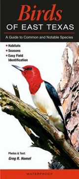 Birds of East Texas | Greg R. Homel |