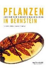 Pflanzen in Bernstein