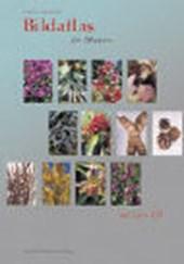 Bildatlas der Pflanzen