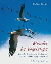 Wunder des Vogelzuges