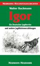 Igor - ein Deutscher Jagdterrier