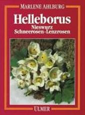 Helleborus. Nieswurz, Schneerosen, Lenzrosen