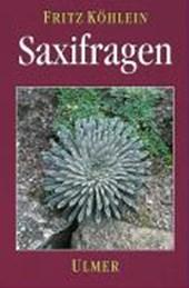 Saxifragen und andere Steinbrechgewächse