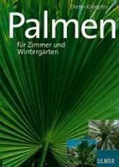 Schöne Palmen für Zimmer und Wintergarten