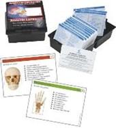 Anatomie-Lernkarten. Das Menschliche Skelett in Lernkartei
