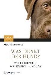 Was denkt der Hund?