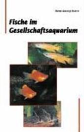 Fische im Gesellschaftsaquarium