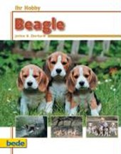 Ihr Hobby Beagle