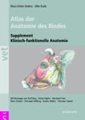 Klinische Anatomie des Rindes