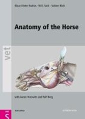 Anatomy of the Horse
