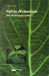 Salvia Divinorum - Der Wahrsagesalbei
