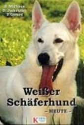 Weißer Schäferhund heute