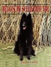 Belgische Schäferhunde - Heute