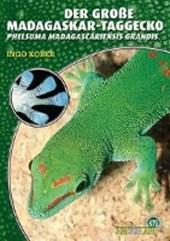 Der Große Madagaskar Taggecko